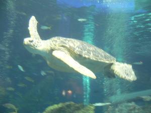 Aquarium_001_2