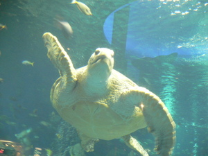 Aquarium_002_2