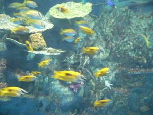 Aquarium_003_2
