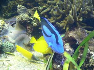 Aquarium_004_2