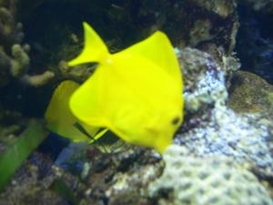 Aquarium_005_2