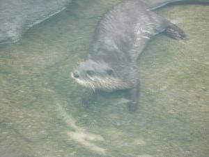 Aquarium_016