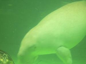 Aquarium_017