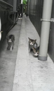 kitties...so cute...!!